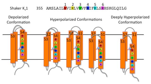conformations of voltage-sensor domain