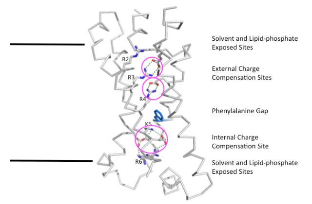 voltage-sensor domain charge compensation