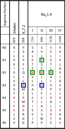 Positions of naturally occurring mutations along VSD S4 helices
